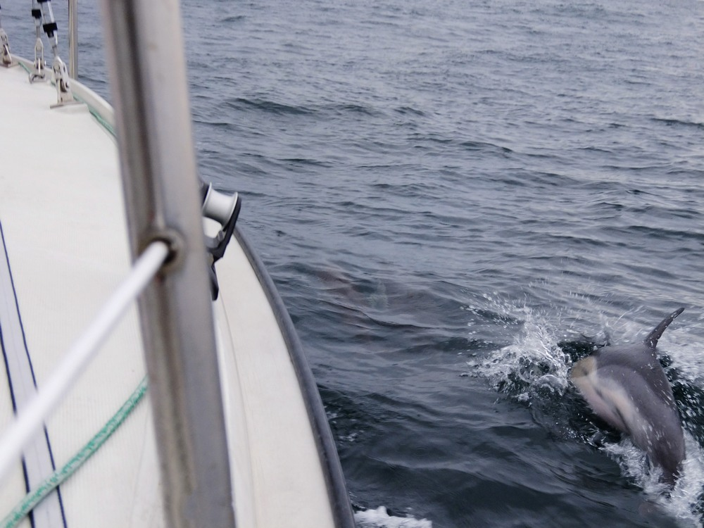 We've been escorted by Dolphins while sailing to Roscoff