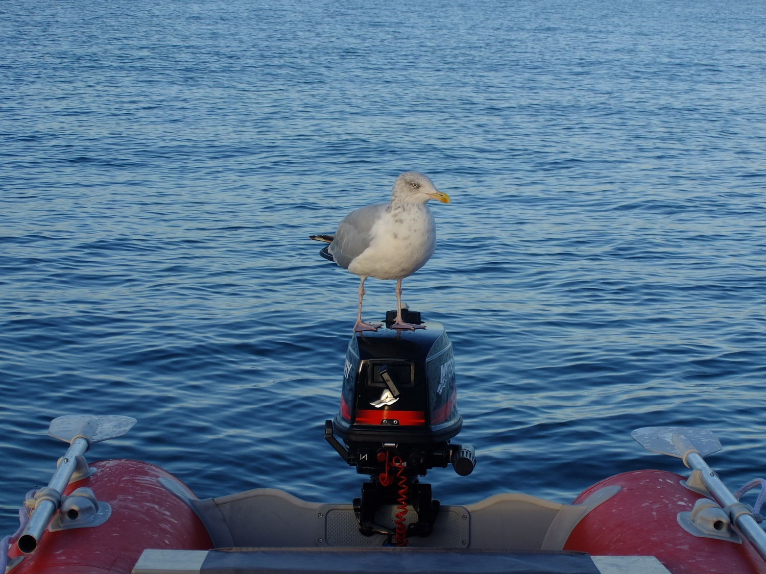New accessory on our outboard engine